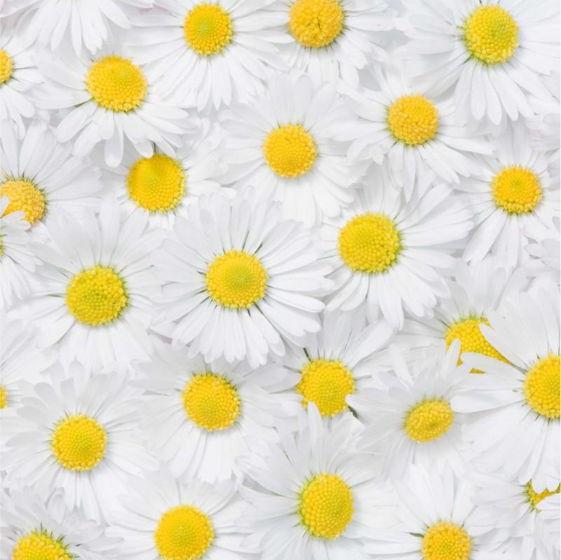Fliesenaufkleber Motiv Margeritenblüte 15x15 cm – Bild 2