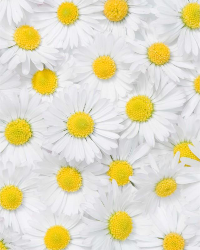 Fliesenaufkleber Motiv Margeritenblüte 20x25 cm – Bild 3