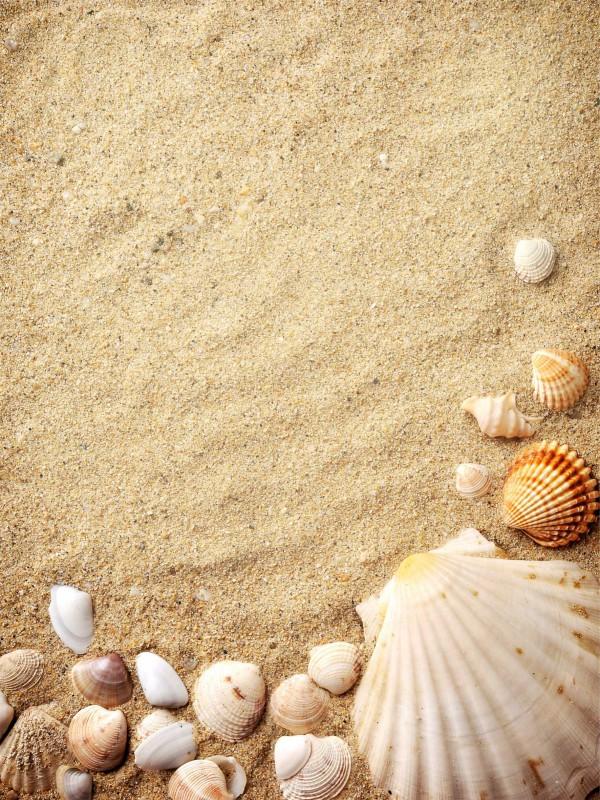 Fliesenaufkleber Motiv Muscheln im Sand 15x20 cm – Bild 4