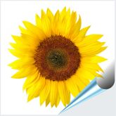 Fliesenaufkleber Motiv Sonnenblume 15x15 cm 001