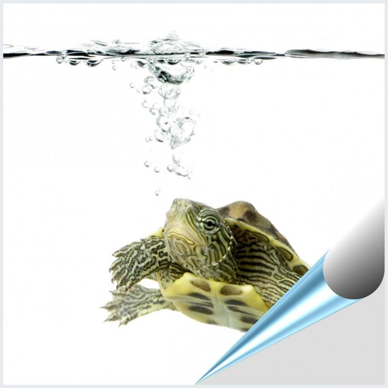 Fliesenaufkleber Motiv Wasserschildkröte 10x10 cm – Bild 1