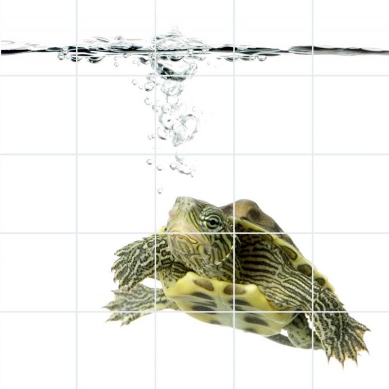 Fliesenbild Wasserschildkröte – Bild 1