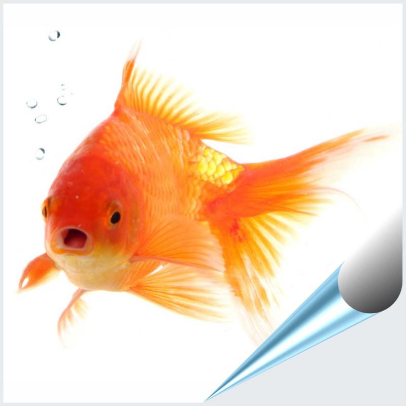 Fliesenaufkleber Motiv Goldfisch 10x10 cm – Bild 1