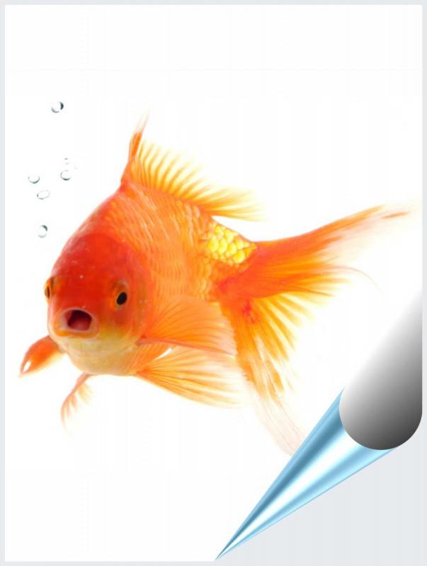 Fliesenaufkleber Motiv Goldfisch 15x20 cm