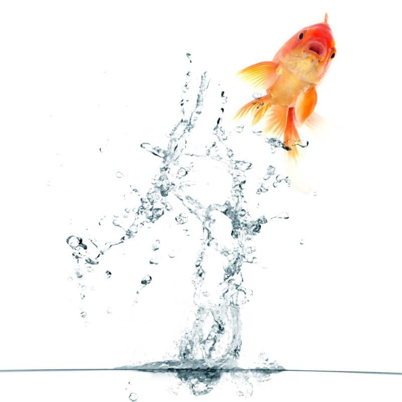 Fliesenaufkleber Motiv Springing Fish 10x10 cm – Bild 2