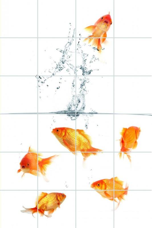 Fliesenbild Familie Goldfisch