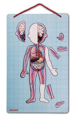 Janod Magnetspiel Körper des Menschen 99 Teile in 11 Sprachen Lernspiel 05491 – Bild 4