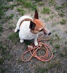 Hunde Führleine lautlos rund aus bestem Fahlleder Ø 6 mm, 180 cm lang in Natur hell oder dunkel erhältlich