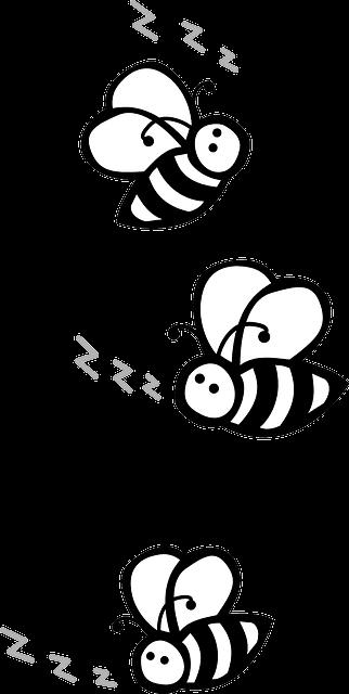 Bienen Lebendfalle