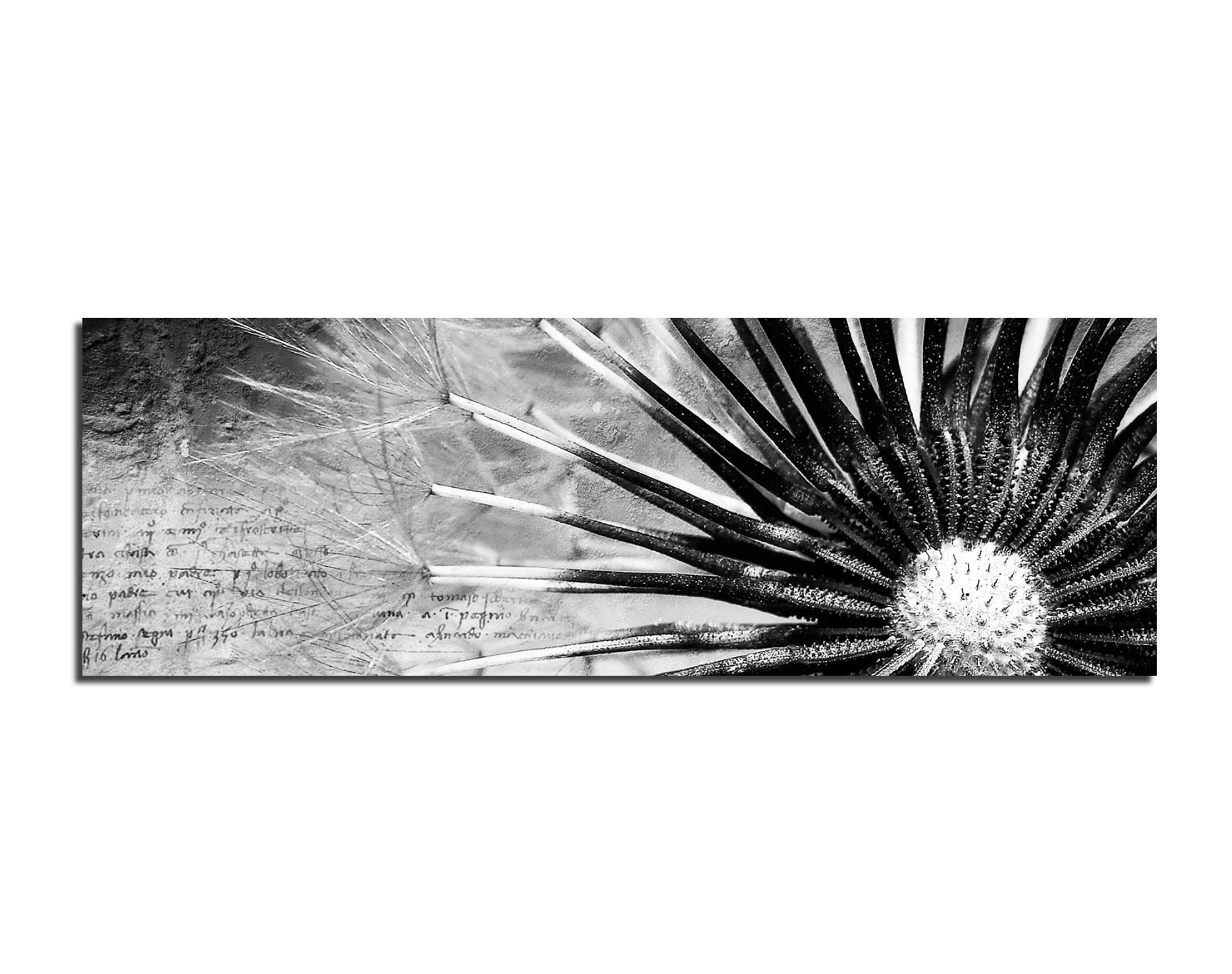 Leinwandbild Pusteblume   schwarz weiß