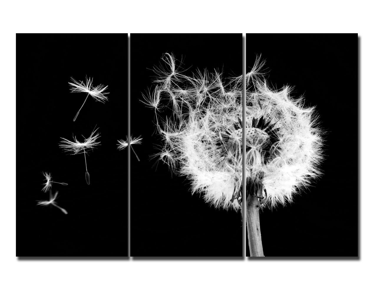 leinwandbild pusteblume schwarz wei triptychon. Black Bedroom Furniture Sets. Home Design Ideas