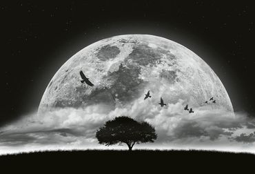 Vliestapete Moon and Birds 372x254cm