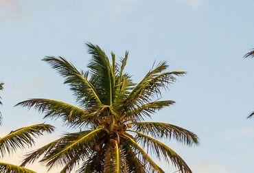 Vliestapete Take me to Ibiza 372x254cm – Bild 3