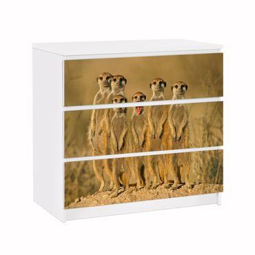 Möbelfolie IKEA Kommode - Selbstklebefolie - Design: Meerkat Familiy – Bild 1