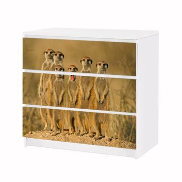 Möbelfolie IKEA Kommode - Selbstklebefolie - Design: Meerkat Familiy – Bild 3