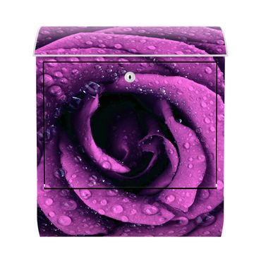 Design Briefkasten - Lila Rose - mit Zeitungsfach  – Bild 1