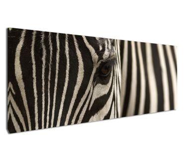 Leinwandbild Zebra Augenblick – Bild 2