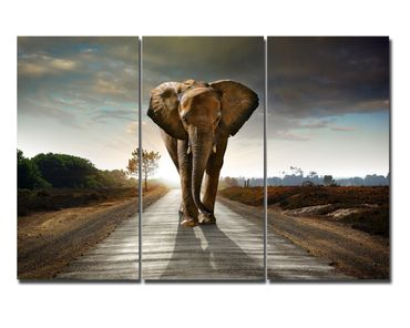 Leinwandbild Big Elephant on Street Triptychon