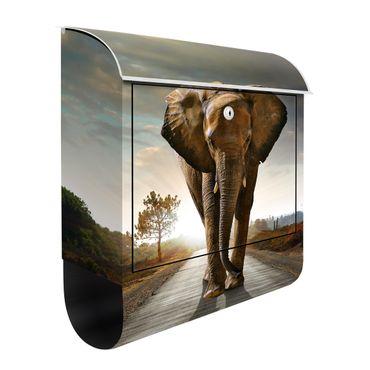 Design Briefkasten - Elefanten Spaziergang - mit Zeitungsfach  – Bild 3