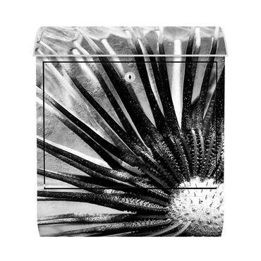 Design Briefkasten - Pusteblume Schwarz & Weiß - mit Zeitungsfach