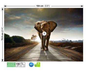 Fototapete Big Elephant on Street – Bild 2
