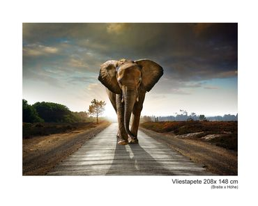 Fototapete Big Elephant on Street – Bild 5