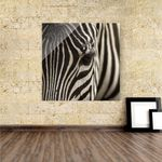 Acrylbild Zebra Augenblick