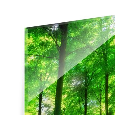 Glasbild Green Forest Lights – Bild 7