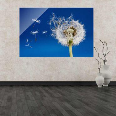 Acrylbild Pusteblume Bume Blüte Wiese Pflanze Natur Bild Wandbild einteilig Acryl No.AB3-2_290 – Bild 2