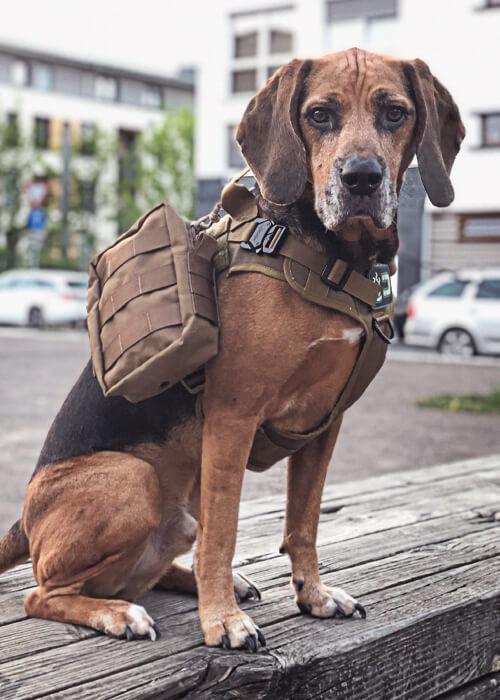 Hundegeschirr Mika