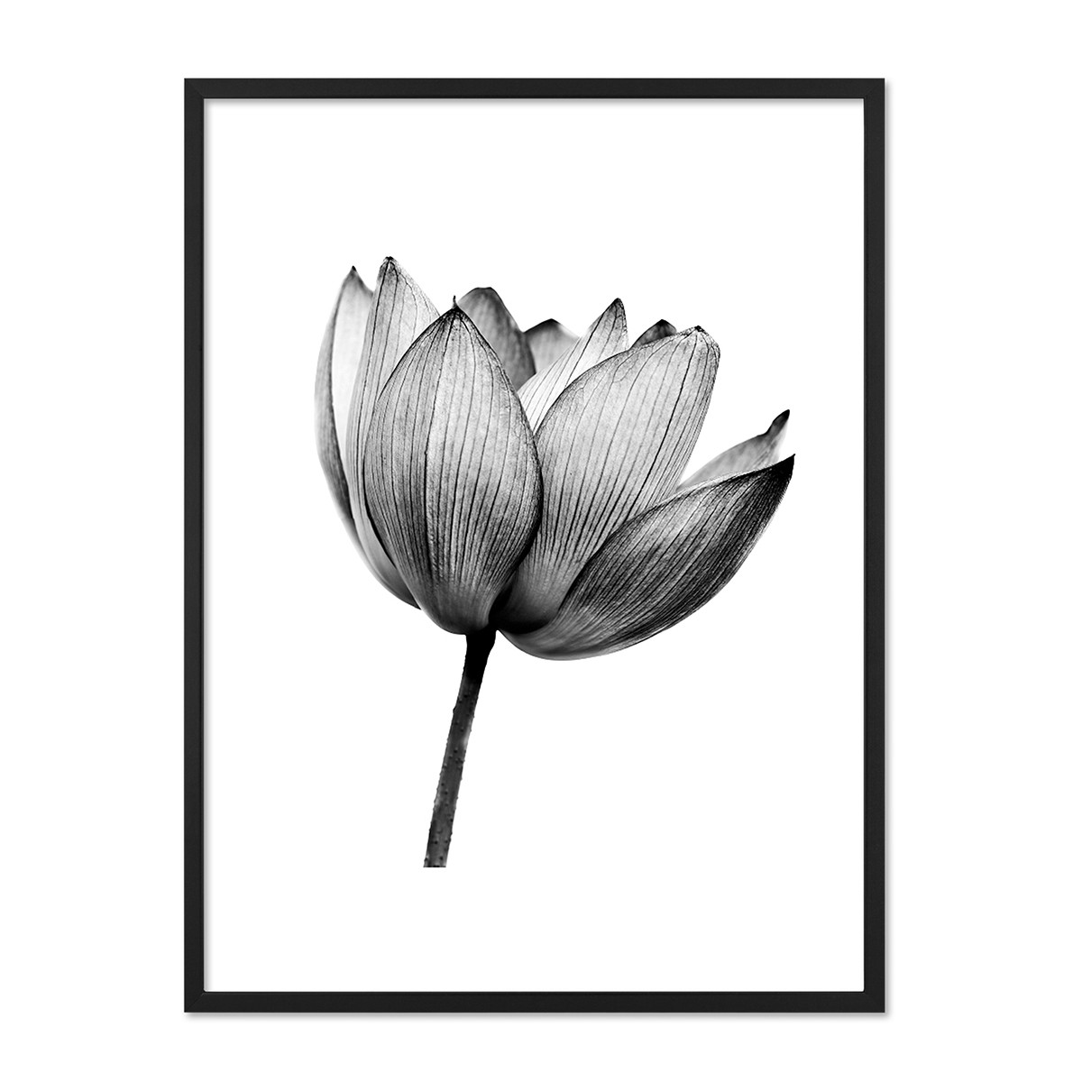 design poster mit bilderrahmen schwarz 39 lotus 39 30x40 cm schwarz weiss motiv natur lotosblume. Black Bedroom Furniture Sets. Home Design Ideas