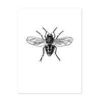 Design-Poster 'Hausfliege' 30x40 cm schwarz-weiss Motiv Zeichnung Insekt
