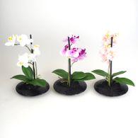 Orchidee Melaminschale Höhe 30cm weiß rosa oder lila Kunststoff Dekopflanze