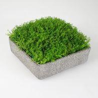 Topfpflanze 20x20cm grün Bubikopf im Topf Dekopflanze Kunstblume Kunstpflanze