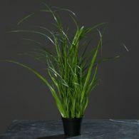 Grasbüschel getopft 35cm Dekogras Kunstpflanze Dekopflanze Gras Schneidegras