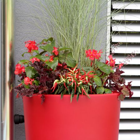 Regenspeicher 150 Liter Rainbowl Flower chilli – Bild 5