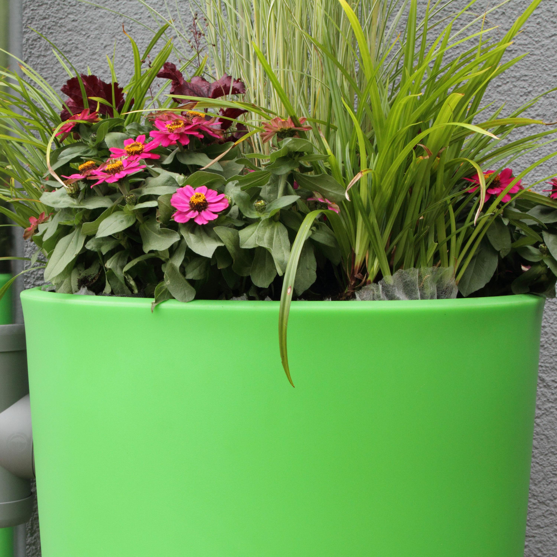 Regentonne Rainbowl Flower 150 Liter Kiwi