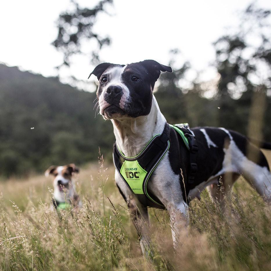 Gepolsterte Hundegeschirre