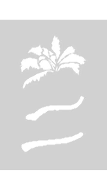 Createx Schablone Mylar - Palmen 3 Step-by-Step 262 538