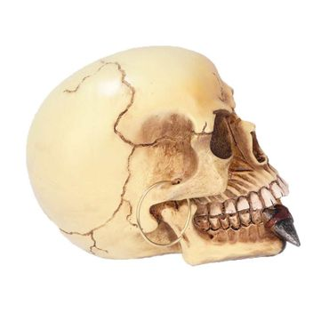 Polyresin Totenkopf Spardose – Bild 2