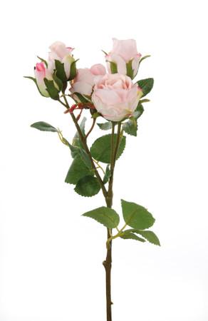 Gilde Rosenzweig  Nina , rosa
