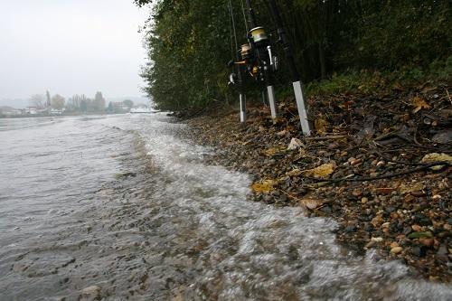 Am Rhein Angeln